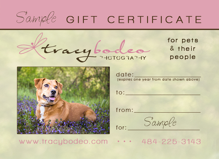 Gift Certificates Fetching Pet Portraits Tracy Bodeo Photography - Dog gift certificate template free